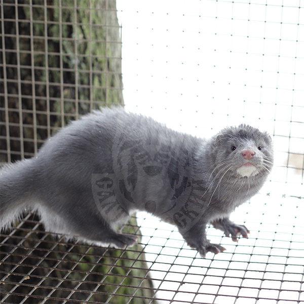 Mink (Silver-blue, velvet)