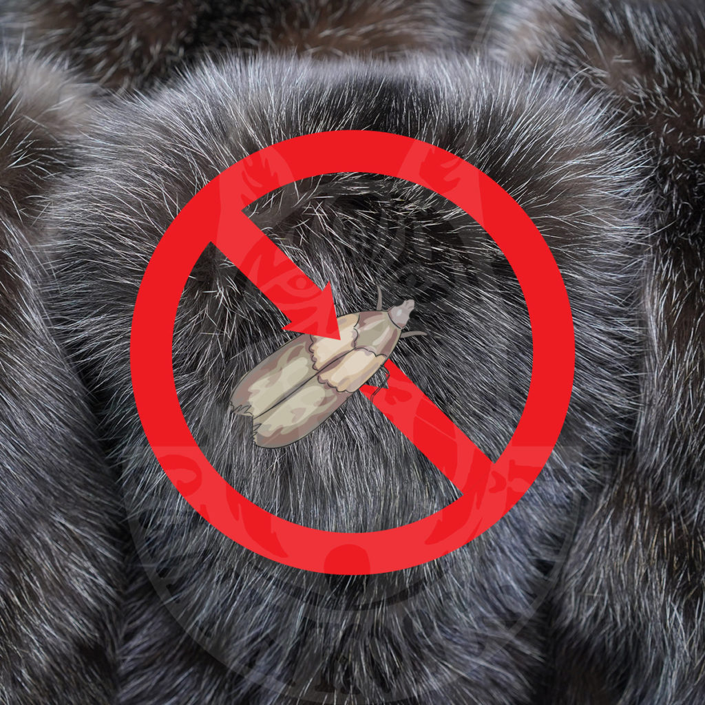 How to protect a fur product from insects?