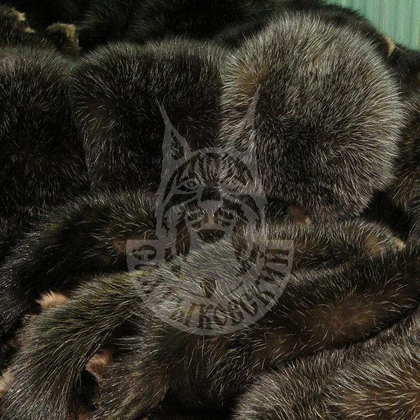 Шкурки соболя, порода «Салтыковская-1» (Седой)