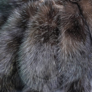 At the international fur auction Saga Furs started bidding: Time to buy Russian luxe class fur!
